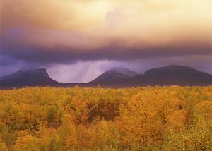 Thunderstorm over Mountains & Autumn Colors, Abisko, Lappland, Sweden