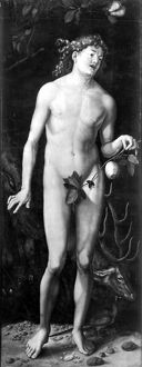 ADAM. Oil on wood, perhaps by Hans Baldung Grien, after the painting, 1507, by Albrecht