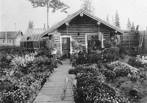 ALASKA: LOG CABIN. A log cabin with an attached greenhouse and a large flower garden