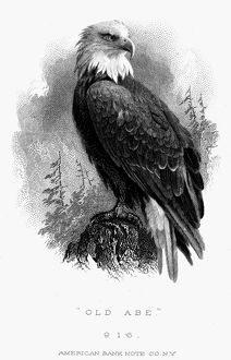 BALD EAGLE, 1870. 'Old Abe,' the bald eagle which was the mascot of the Eight