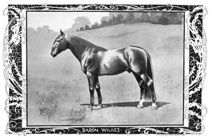 sports/baron wilkes 1902 american standardbred racehorse