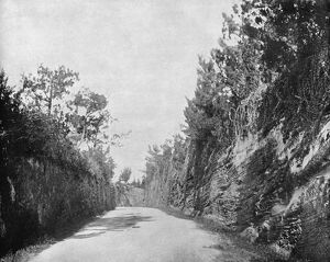 BERMUDA, c1890. A road built by convicts in Bermuda. Photograph, c1890