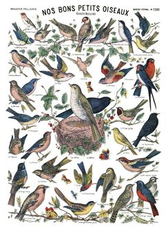 BIRDS, c1890. 'Nos bons petits oiseaux' (Our Lovely Little Birds). Engraving
