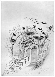 BLACKBURN: BIRDS, 1895. 'Bridge Castle Bathgate - The Rook