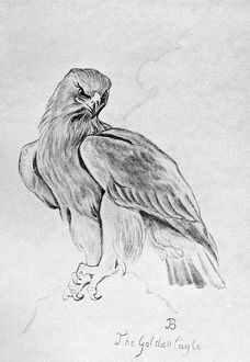 BLACKBURN: BIRDS, 1895. 'Golden Eagle.' Illustration by Jemima Blackburn, 1895