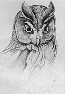 BLACKBURN: BIRDS, 1895. 'Long Eared Owl.' Illustration by Jemima Blackburn, 1895