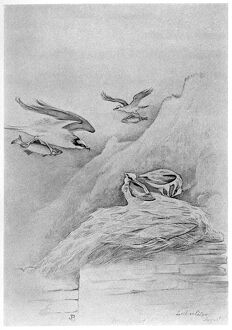 BLACKBURN: BIRDS, 1895. 'Osprey.' Illustration by Jemima Blackburn, 1895
