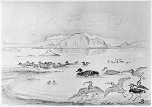BLACKBURN: BIRDS, 1895. 'Winter - Lapwing, Turnstone, Great Northern Diver, Little Auk