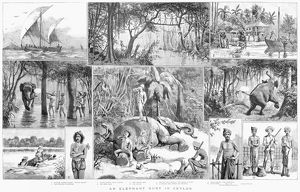 CEYLON: ELEPHANT HUNT. Elephant hunting in Ceylon. English engraving, 1887