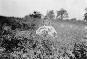 agriculture/child labor 1909 year old berry picker rock