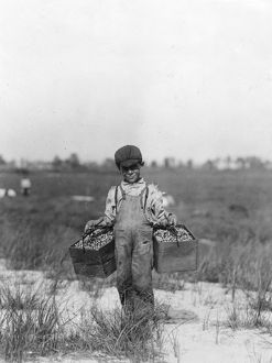 agriculture/child labor 1910 year old cranberry picker carries
