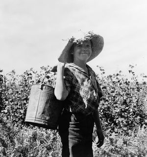 whats new/child labor 1939 young migrant bean picker marion