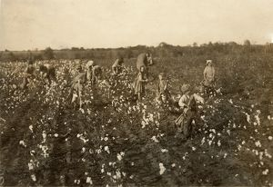 agriculture/child labor cotton 1913 family cotton pickers