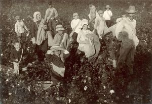 CHILD LABOR: COTTON, 1913. Group of young cotton pickers near Waxahachie, Texas