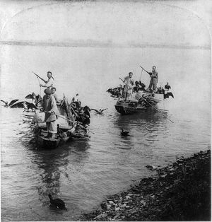 CHINA: FISHING, s1901. Chinese men fishing with trained cormorants in the Grand Canal of Soo-chow