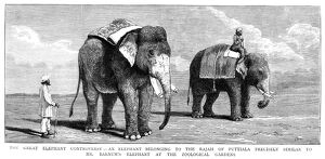 CIRCUS ELEPHANTS, 1884. 'The Great Elephant Controversy