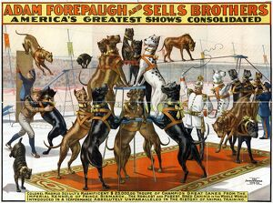 CIRCUS POSTER, 1898, Poster advertising Colonel Magnus Schults' performing Great