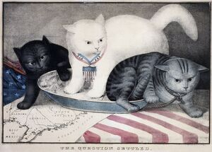 cats/civil war cartoon c1865 the question settled