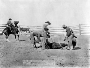 COWBOYS, 1888. Branding a calf at a South Dakota ranch