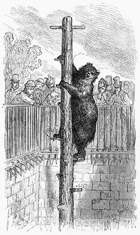 DORE: LONDON, 1872. A bear at the London Zoo