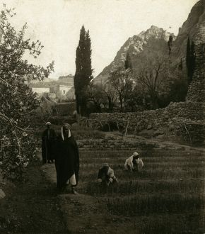 EGYPT: MONASTERY. Men in the gardens at Saint Catherine's monastery at Mount Sinai