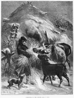 FARMER, 1873. 'Christmas in the fields.' Wood engraving, 1873, by Charles Maurand