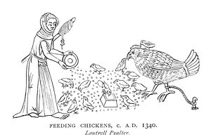 FEEDING CHICKENS. A woman feeding chickens
