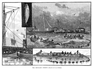 FISHING, 1882. 'The menhaden fishery.' Engraving, 1882