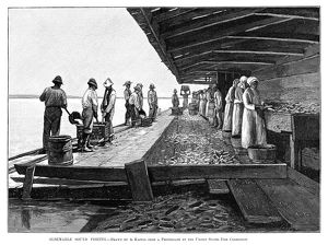FISHING INDUSTRY, 1889. 'Albemarle sound fishing.' Engraving, 1889