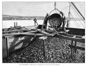 FISHING INDUSTRY, 1889. 'A big menhaden catch.' Engraving, 1889