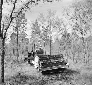 FLORIDA: LAND USE, 1937. A tractor clearing brush to prepare the ground for seed planting