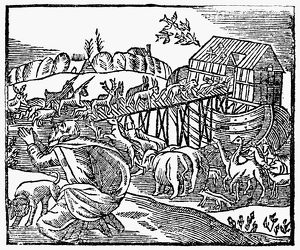GENESIS: NOAH'S ARK. Woodcut, English, 1708