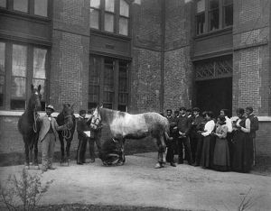 HAMPTON INSTITUTE, c1900. Agricultural class studying the horse at Hampton Institute