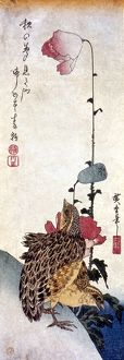HIROSHIGE: POPPIES. Poppies and Quail. Woodblock print by Ando Hiroshige, c1835.