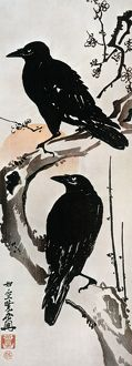JAPANESE PRINT: CROW. Two Crows on a Flowering Plum in Winter. Japanese Kakemono-e color print