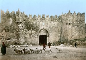 JERUSALEM: DAMASCUS GATE. A shepherd leads his flock of sheep past the Damascus Gate