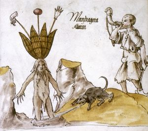 MANDRAKE AND HERBALIST. Mandrake with hornblowing herbalist and hound