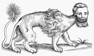 MANTICORE, 1607. Woodcut from Edward Topsell's 'The History of Four-Footed Beasts