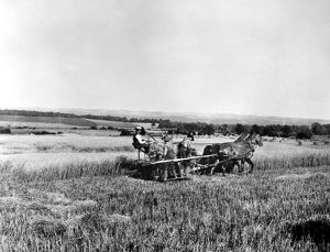 agriculture/marsh harvester american farmers harvesting wheat