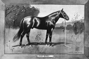 MAY KING, 1902. American racehorse. Illustration, 1902