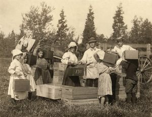 MIGRANT WORKERS, c1910. A group of young workers carrying in their pecks of cranberries