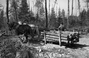 whats new/minnesota logging 1937 transporting timber