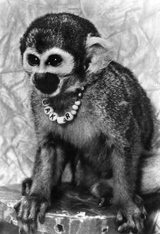 Miss Baker, one of the first primates to complete a space flight in 1959