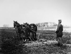 NEBRASKA: HARROWING. A farmer breaking up soil with a horse-drawn harrow on a farm