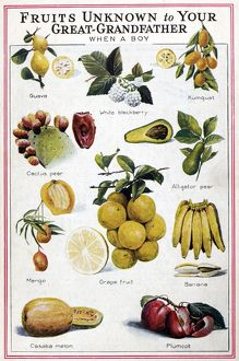 NEW FRUITS, c1950s. 'Fruits unknown to Your Great-Grandfather when a Boy