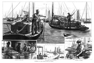 NEW YORK: OYSTERS, 1886. 'Oystering on Long Island.' Engraving from a drawing by F
