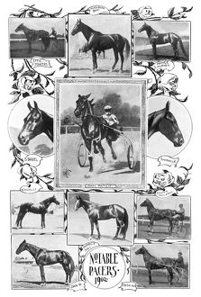 sports/pacer racehorses 1902 notable pacer racehorses