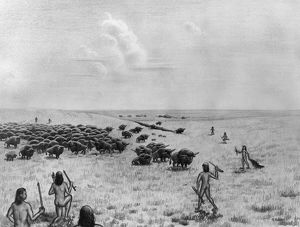 PALEOINDIAN BUFFALO HUNT. Paleoindians converging around a buffalo herd at the