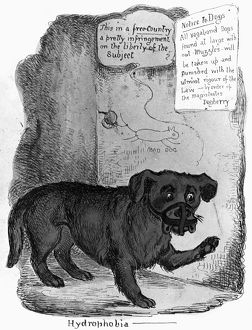 RABIES CARTOON, c1890. 'Hydrophobia.' A muzzled dog complaining about rabies vaccination