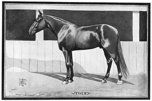 sports/racehorse 1902 todd american racehorse